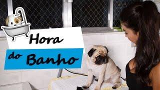 Dia de Banho   Pugs