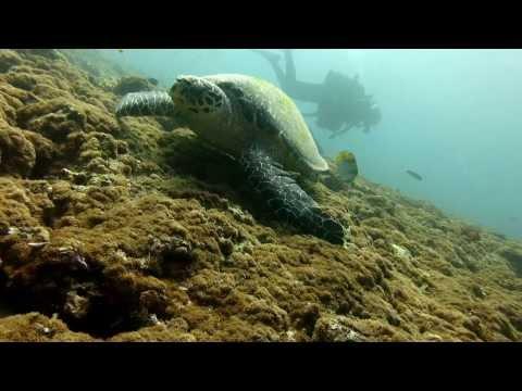 Maldives Wildlife 0.0.5 (Maldivas)