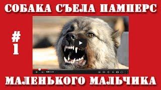 Видео приколы | #1 | Собака съела памперс маленького мальчика.