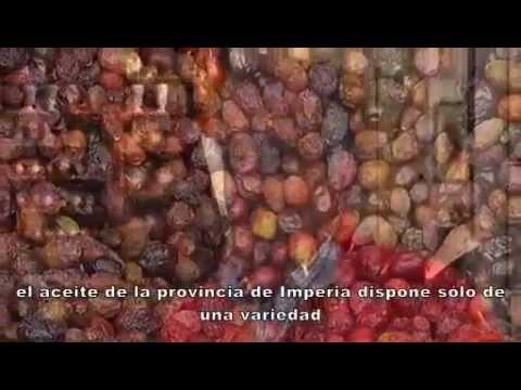Imperia capital del aceite (ES) - Liguria - Italia.it