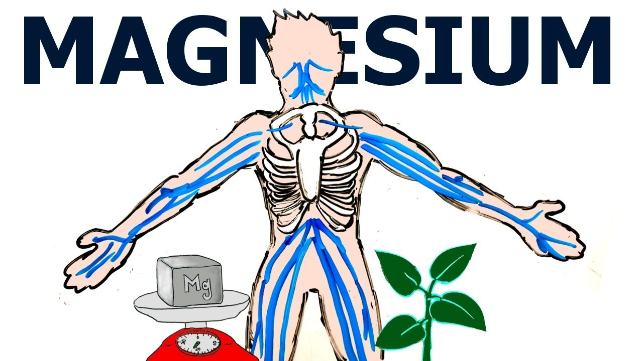 Image result for What Does Magnesium Do For The Body
