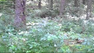 �������� ���� релаксация музыка, вода, природа, лес, отдых, тихий ������