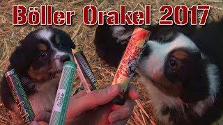 Böller-Orakel 2017 | Welpen-Edition | FireworksandBalloons