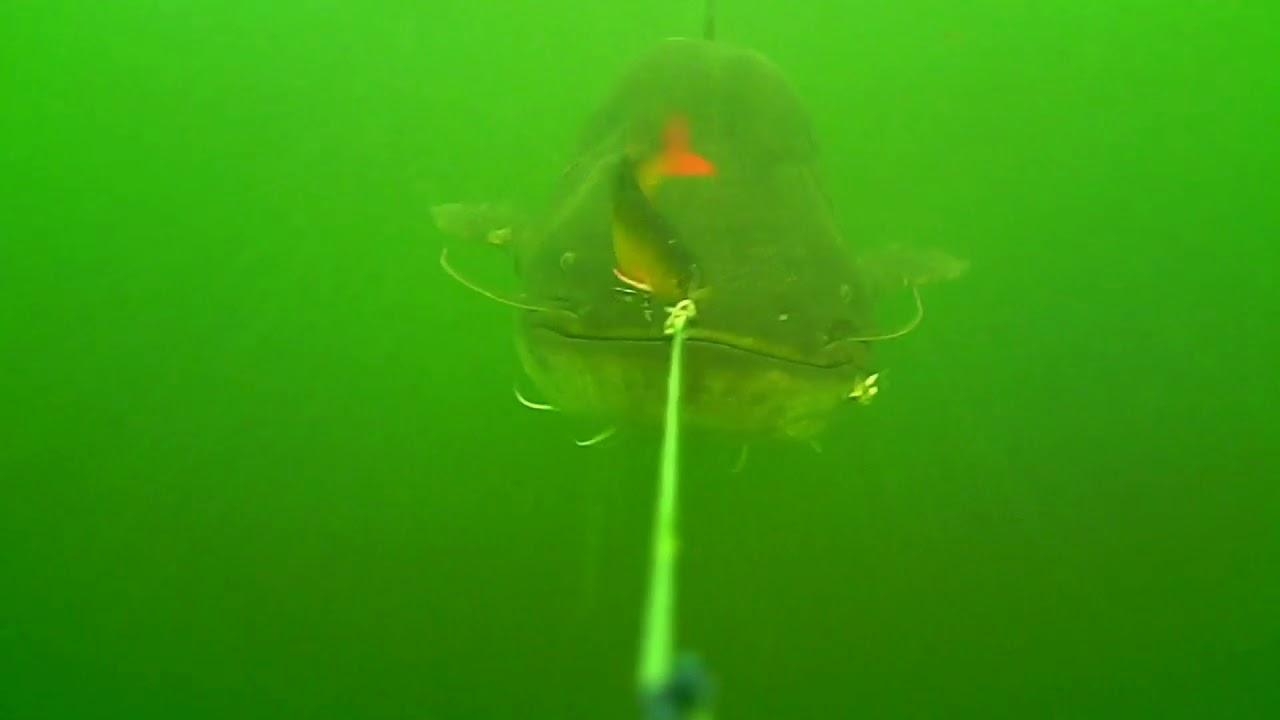 Huge Wels Catfish underwater attack!!