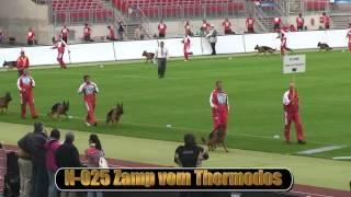 2010 Sv Bszs Nkgr Part 17 Zamp Vom Thermodos Hd