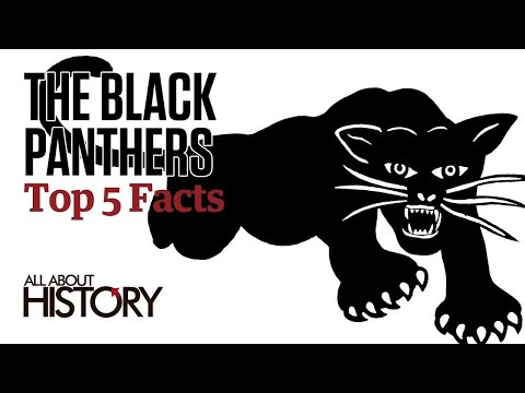 The Black Panthers | Top 5 Facts