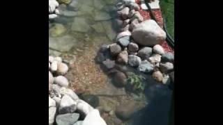 Molly's Garden Pond