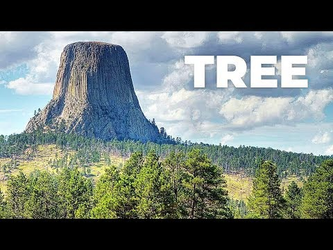 The Biggest Trees In The World ! How Big It Could Be ?!