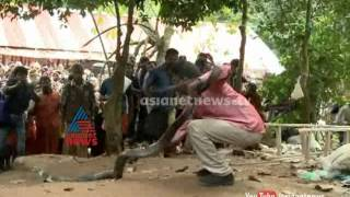 Vava Suresh caught King Cobra in Sabarimala : Sabarimala News