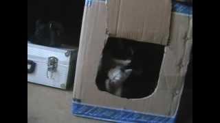 Бюджетный кошкин дом своими руками :)(Вы можете помочь развитию канала... Кошелек Яндекс деньги 410012947863579., 2013-09-15T07:06:09.000Z)