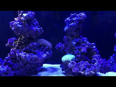 Taking Reef Scaping to the next level in a CADE Pro Reef 1200