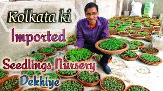 Kolkata ki Imported Seedlings ki Nursery Dekhiye / Visit to imported Seedlings Nursery in Kolkata.