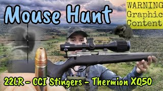 Mouse Hunt - Pest Control & Thermal Shooting with a 22LR Lithgow LA101