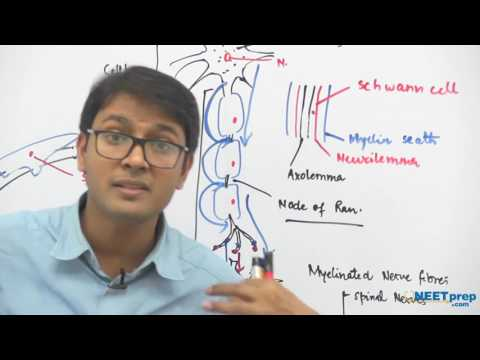 Neurons: Structure & Function - Dr. Rajeev Ranjan   NEET AIIMS   Video Lectures