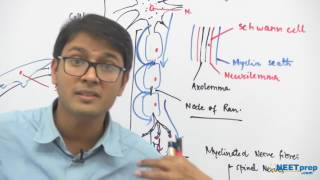 Neurons: Structure & Function - Dr. Rajeev Ranjan | NEET AIIMS | Video Lectures