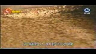 【麻油湯料理】「麻油湯料理」#麻油湯料理,弘益芝麻影片-清...