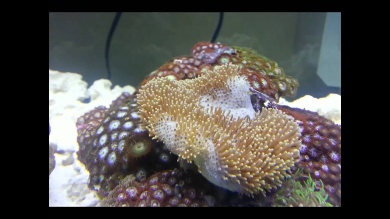 Toadstool Mushroom Leather Coral in time lapse 24X SPEED ...