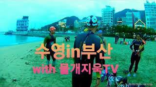 부산 바다수영 새벽수영 수영복 후기