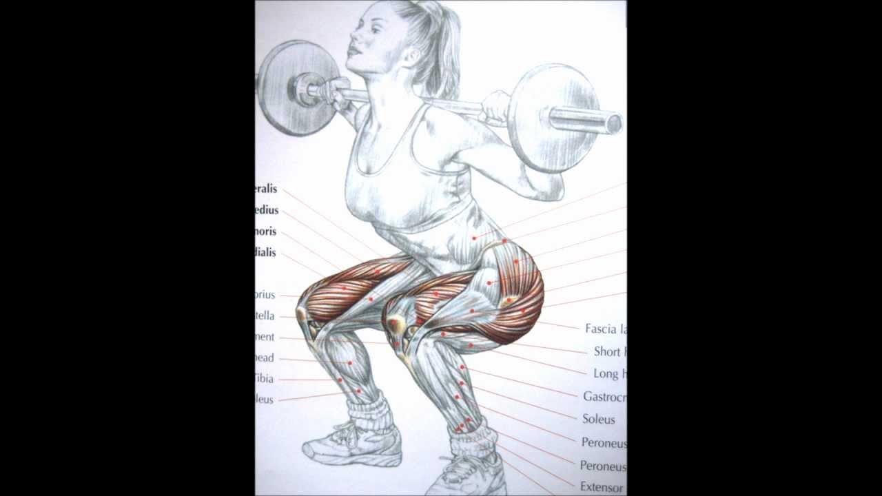 Bodybuilding Leg Exercises And Anatomy Youtube