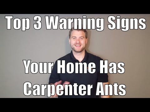 Top 3 Warning Signs Your Home Has Carpenter Ants