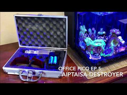 Laser Aiptasia-Destroyer from China