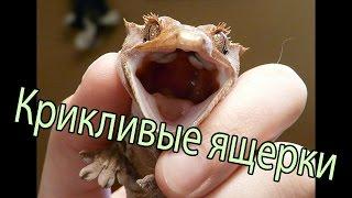 Крики ящериц