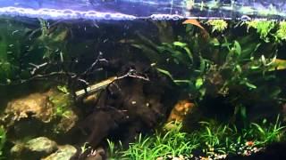 Dwarf Sag 365 Gallon Diy Pond 125 Gallon Planted Tank Koi Pond 55 Gallon Reef