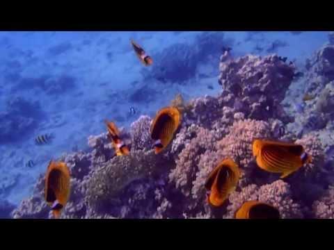Aqaba Japanese Gardens Jordan Snorkeling part2