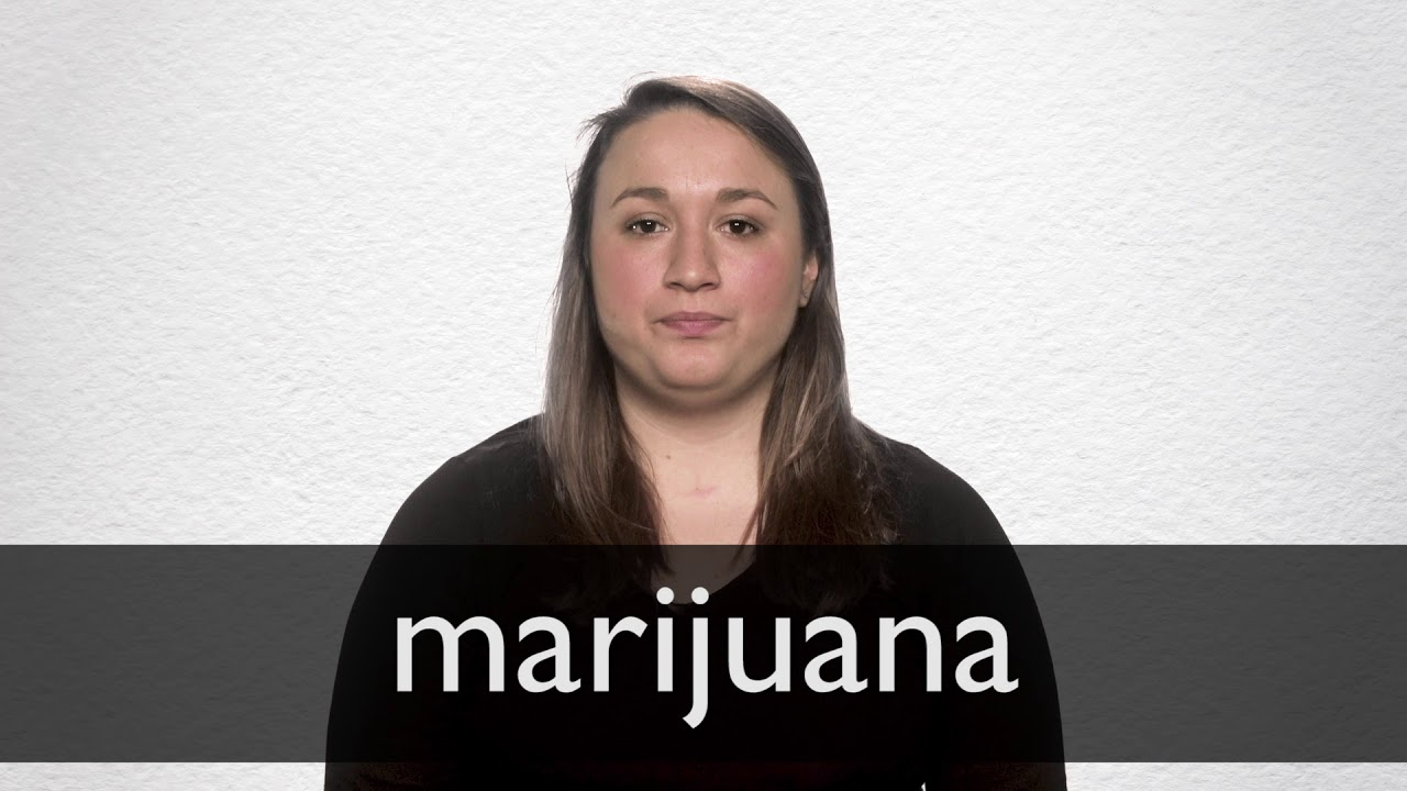 Marijuana definition and meaning   Collins English Dictionary