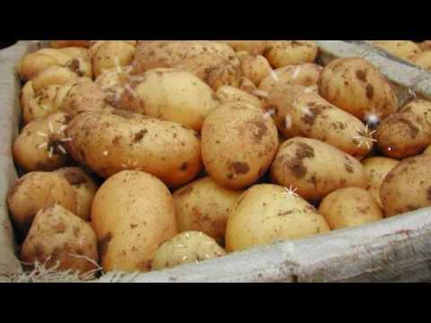 Картофель отварной, калорийность, калории, белки, жиры