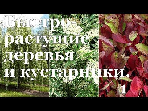 Как вырастить ТЕНЬ на даче? Быстрорастущие деревья и кустарники