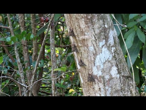 Cuero Y Salado Wildlife Refuge - Part. 2 - Honduras