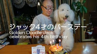ジャックは2010年7月13日に山形のPICCOLA犬舍で生れました ベリ...