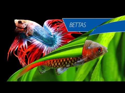 Aquahome Aquatics Centre | Tropical Fish