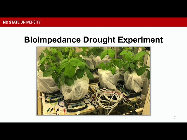 iBionicS Lab — Plants
