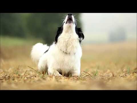 Timmys new dogtricks :-)
