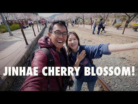 JINHAE : BEST CHERRY BLOSSOM SPOT IN KOREA!