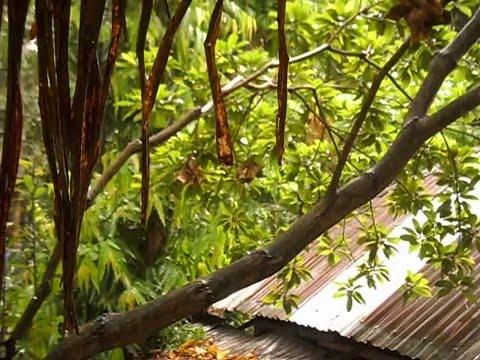 Beautiful rain at dariapur kalibari magura khulna bangladesh