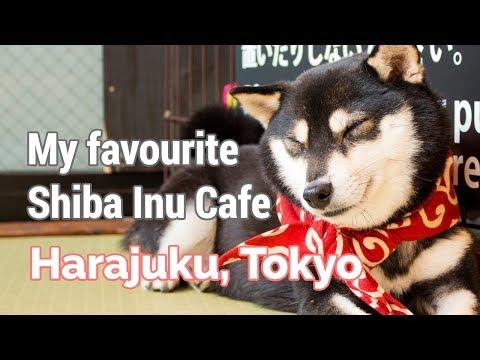 My Favourite Dog Cafe in Harajuku, Japan