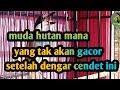 Pancingan Cendet Muda Hutan Kicau Ocehan  Mp3 - Mp4 Download