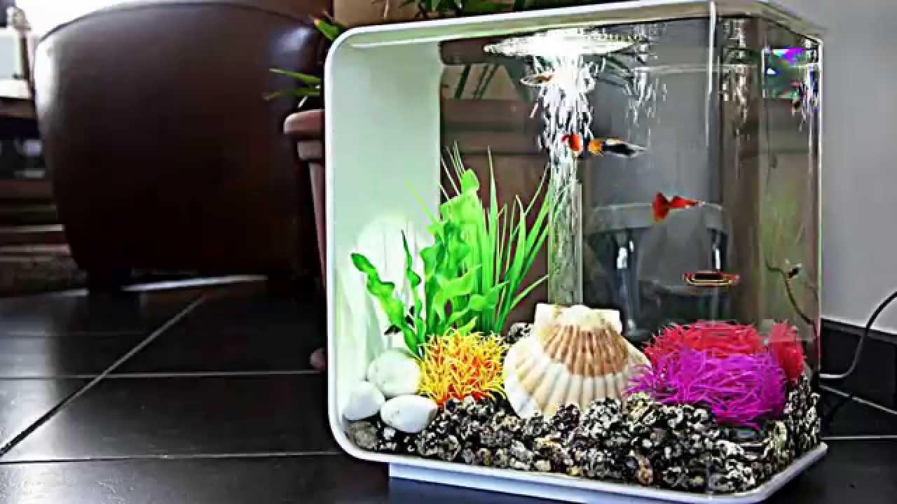 Biorb 15L Aquarium for Xander   YouTube