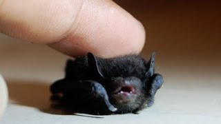 Tiny Baby BAT Rescue - M13