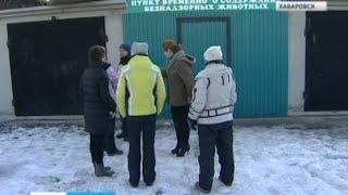 Вести-Хабаровск. Исчезнувшие собаки
