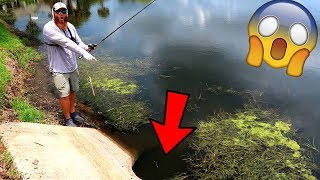 Residential Pond is LOADED w/ BIG BASS (Topwater Fishing)