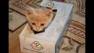 Play Sweet Little Kitten