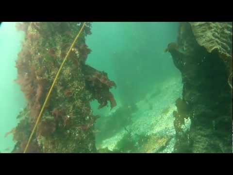 Scuba Diving Pier 62/63 next to the Seattle Aquarium (GOPRO HERO2)