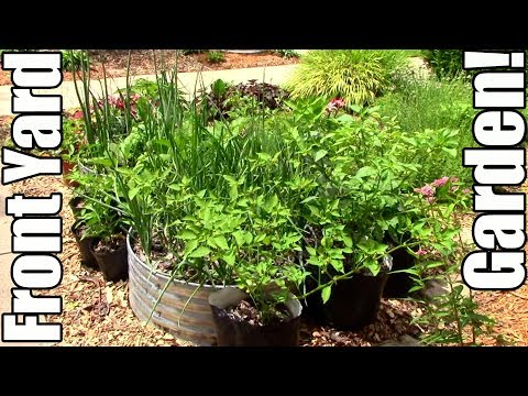 Front Yard Vegetable Garden Tour!