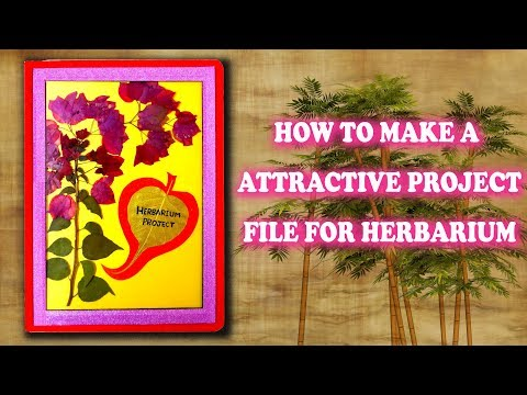 How To Make A Herbarium Project File Attractive For You