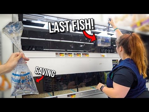 SAVING The LAST FISH Ever SOLD At WALMART!! (Almost Caught)