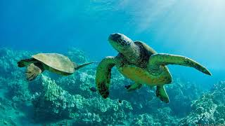 Картинка подводный мир. Морские,  черепахи, под водой, две.